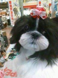 ペットスーパーWAN 岡山店-20100519150620.jpg