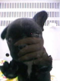 ペットスーパーWAN 岡山店-100520_1802~010001.jpg