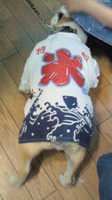 ペットスーパーWAN 岡山店-201006201820001.jpg