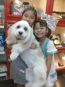 ペットスーパーWAN 岡山店-20100807181023.jpg