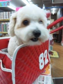 ペットスーパーWAN 岡山店-100921_173922.jpg