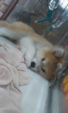 ペットスーパーWAN 岡山店-110529_1616~01.jpg