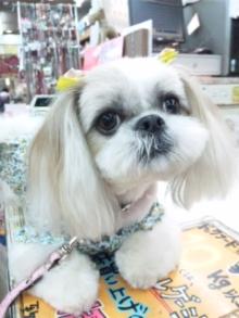 ペットスーパーWAN 岡山店-110731_141847.jpg