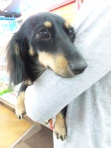 ペットスーパーWAN 岡山店-111010_135445.jpg
