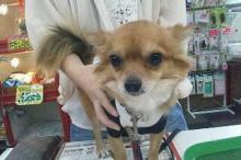 ペットスーパーWAN 岡山店-20111013_021016.jpg