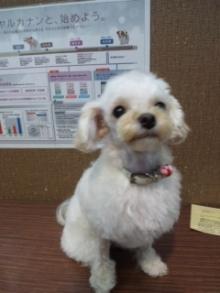 ペットスーパーWAN 岡山店-111112_150125_01.jpg