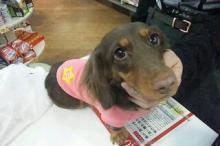 ペットスーパーWAN 岡山店-20111114_010732.jpg