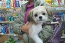 ペットスーパーWAN 岡山店-20111224_221255.jpg