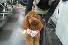ペットスーパーWAN 岡山店-20111224_221347.jpg