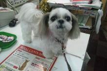 ペットスーパーWAN 岡山店-20111226_224313.jpg