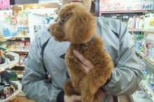 ペットスーパーWAN 岡山店-20111230_213750.jpg
