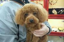 ペットスーパーWAN 岡山店-20111230_213442.jpg