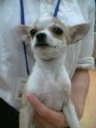 ペットスーパーWAN 岡山店-2012012322080001.jpg
