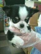 ペットスーパーWAN 岡山店-2012012911520000.jpg