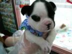 ペットスーパーWAN 岡山店-2012021522340000.jpg