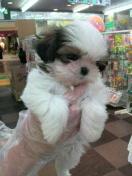 ペットスーパーWAN 岡山店-2012022122110000.jpg