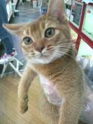 ペットスーパーWAN 岡山店-2012022722550000.jpg