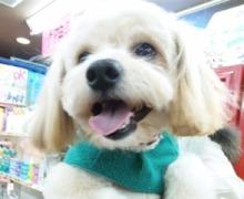 ペットスーパーWAN 岡山店-120226_162015_ed.jpg