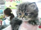 ペットスーパーWAN 岡山店-2012031722340000.jpg