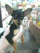 ペットスーパーWAN 岡山店-2012032010210000.jpg