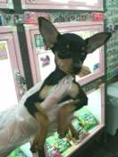 ペットスーパーWAN 岡山店-2012032023560000.jpg