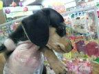 ペットスーパーWAN 岡山店-2012032300230000.jpg
