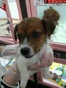 ペットスーパーWAN 岡山店-rps20120326_000100.jpg