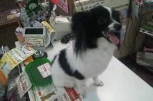 ペットスーパーWAN 岡山店-20120428_212625.jpg