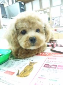 ペットスーパーWAN 岡山店-120429_133757.jpg