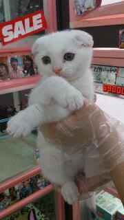ペットスーパーWAN 岡山店-rps20120516_233516.jpg