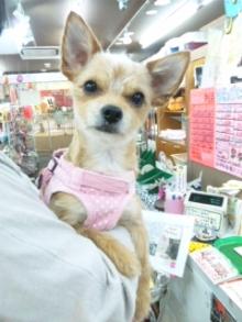 ペットスーパーWAN 岡山店-120523_141756.jpg