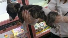 ペットスーパーWAN 岡山店-rps20120530_222407.jpg