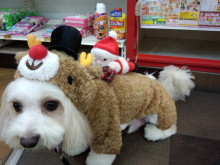 ペットスーパーWAN 岡山店-DSC_0209.jpg