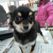 ペットスーパーWAN 岡山店-2012-12-29-13-33-49_photo.jpg