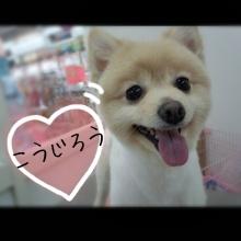 ペットスーパーWAN 岡山店-Camely_20130419_023817.jpg
