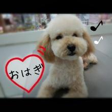 ペットスーパーWAN 岡山店-Camely_20130420_211551.jpg