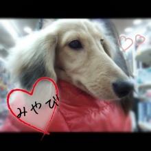 ペットスーパーWAN 岡山店-Camely_20130421_203957.jpg