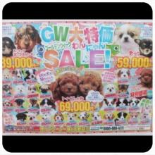 ペットスーパーWAN 岡山店-Camely_20130429_032027.jpg
