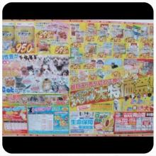 ペットスーパーWAN 岡山店-Camely_20130429_032059.jpg