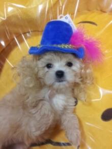六本木WANのブログ-2011-07-29 16.39.30_ed.jpg2011-07-29 16.39.30_ed.jpg