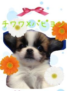 六本木WANのブログ-IMG_1332.jpg