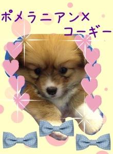 六本木WANのブログ-IMG_6052.jpg